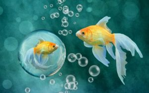 احلي صور سمك في العالم 2 450x281 300x187 صور سمك جميل جدا والوان انواع مختلفة من السمك