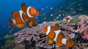 احلي صور سمك في العالم 3 450x253 300x169 صور سمك جميل جدا والوان انواع مختلفة من السمك