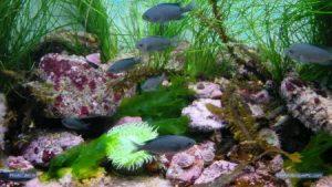 خلفيات سمك جديدة hd 1 450x253 300x169 صور سمك جميل جدا والوان انواع مختلفة من السمك