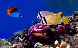 خلفيات سمك جديدة hd 2 450x281 300x187 صور سمك جميل جدا والوان انواع مختلفة من السمك