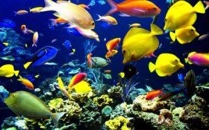 خلفيات سمك جديدة hd 3 450x281 300x187 صور سمك جميل جدا والوان انواع مختلفة من السمك