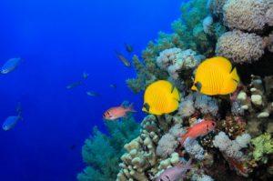 سمك ملون 1 450x298 300x199 صور رمزيات وخلفيات اسماك ملونة جديدة