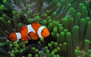 صور اجمل اسماك العالم 1 450x281 300x187 صور سمك جميل جدا والوان انواع مختلفة من السمك
