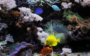 صور اجمل اسماك العالم 2 450x281 300x187 صور سمك جميل جدا والوان انواع مختلفة من السمك