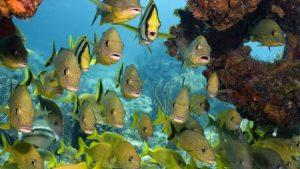 صور اجمل اسماك العالم 3 450x253 300x169 صور سمك جميل جدا والوان انواع مختلفة من السمك