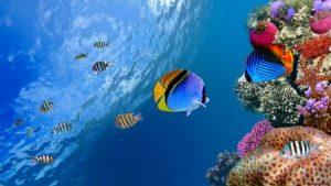 صور اجمل الاسماك البحرية في العالم خلفيات HD 2 450x253 300x169 صور سمك جميل جدا والوان انواع مختلفة من السمك