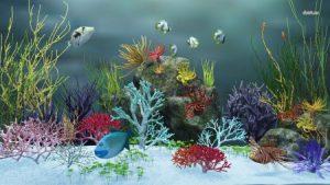صور خلفيات سمك2017 ملون 1 450x253 300x169 صور رمزيات وخلفيات اسماك ملونة جديدة