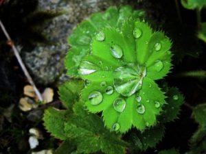 اوراق شجر بالصور 5 450x337 300x225 صور اوراق الشجر الاخضر , ورق شجر جميل في فصل الخريف