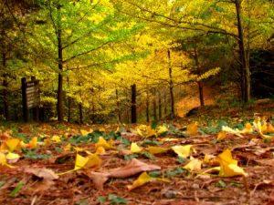 خلفيات ورق شجر جميلة 1 450x338 300x225 صور اوراق الشجر الاخضر , ورق شجر جميل في فصل الخريف