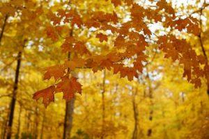 خلفيات ورق شجر جميلة 3 450x300 300x200 صور اوراق الشجر الاخضر , ورق شجر جميل في فصل الخريف