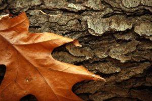 خلفيات ورق شجر جميلة 4 450x300 300x200 صور اوراق الشجر الاخضر , ورق شجر جميل في فصل الخريف