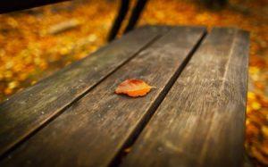 صور اوراق الشجر خلفيات عن فصل الخريف 2017 1 450x281 300x187 صور اوراق الشجر الاخضر , ورق شجر جميل في فصل الخريف