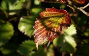 صور اوراق الشجر 1 450x285 300x190 صور اوراق الشجر الاخضر , ورق شجر جميل في فصل الخريف