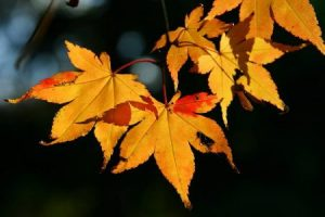 صور اوراق الشجر 3 450x300 300x200 صور اوراق الشجر الاخضر , ورق شجر جميل في فصل الخريف