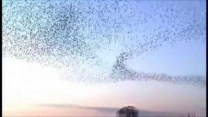 صور طيور مهاجرة 3 450x253 300x169 صور طبيعية جميلة , رمزيات اشبه باللوحات الفنيه