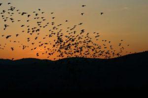 صور طيور مهاجرة 4 450x299 300x199 صور طبيعية جميلة , رمزيات اشبه باللوحات الفنيه