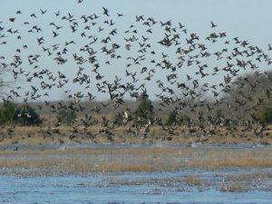 صور طيور مهاجره جميلة جدا 3 450x338 300x225 صور طبيعية جميلة , رمزيات اشبه باللوحات الفنيه