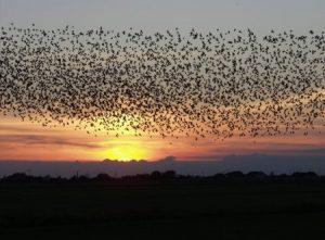 صور عن هجرة الطيور 1 450x331 300x221 صور طبيعية جميلة , رمزيات اشبه باللوحات الفنيه