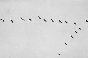 صور عن هجرة الطيور 2 450x300 300x200 صور طبيعية جميلة , رمزيات اشبه باللوحات الفنيه
