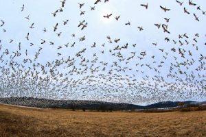 صور عن هجرة الطيور 4 450x300 300x200 صور طبيعية جميلة , رمزيات اشبه باللوحات الفنيه