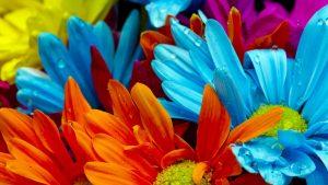 صور-ورود-جميلة-اجمل-صور-الورد-والازهار-بجودة-HD-41-300x169 صور ورد, صور ورود متنوعه حمراء زرقاء جميلة لامعه, نوع جديد من الورد