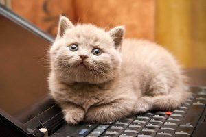 01-cat-wants-to-tell-you-laptop-300x200 صور قطط حلوه, صور قطط قمرات, قطة جميله Photos Cats