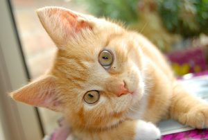 101438745-cat-conjunctivitis-causes-300x202 صور قطط حلوه, صور قطط قمرات, قطة جميله Photos Cats