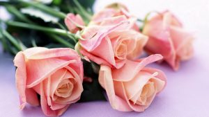 2013_1386695815_860-300x169 صور ورد, صور ورود متنوعه حمراء زرقاء جميلة لامعه, نوع جديد من الورد