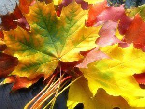 2015_1391652769_723-300x225 صور طبيعه للخريف والربيع hd , صور طبيعه رومانسيه خريف وربيع