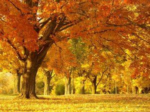 2015_1391652770_140-300x225 صور طبيعه للخريف والربيع hd , صور طبيعه رومانسيه خريف وربيع
