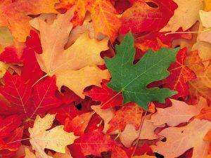 2015_1391652771_750-300x225 صور طبيعه للخريف والربيع hd , صور طبيعه رومانسيه خريف وربيع