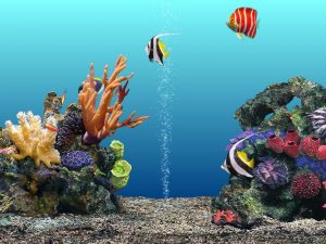 2015_1391742653_757-300x225 صور اسماك, صور اسماك البحر الاحمر, تحميل صور اسماك متحركة