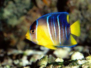 2015_1418659464_851-300x225 صور اسماك, صور اسماك البحر الاحمر, تحميل صور اسماك متحركة