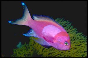 2015_1418659464_986-300x200 صور اسماك, صور اسماك البحر الاحمر, تحميل صور اسماك متحركة