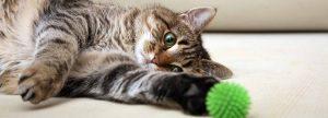 32445_petsproducts_march-pets-site-flip-vertical-store_8_vd-hero_1920x693._CB299747913_-300x108 صور قطط حلوه, صور قطط قمرات, قطة جميله Photos Cats