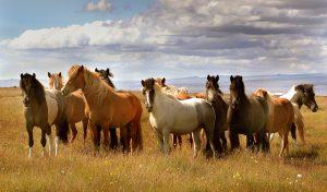 3882154366_f85f04cb17_b-300x176 صور خيول جميلة, صور حصان, اجمل صور الخيل