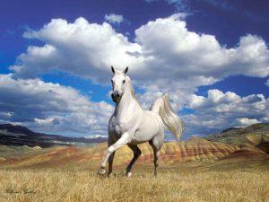 5jDOI1g-300x225 صور خيول جديدة وجميلة روعة, صورة حصان عربي اصيل, احصنة حلوة خلفيات