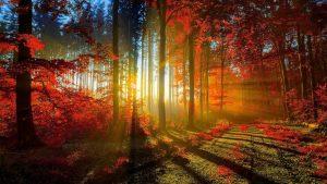 645fe34f1a257bb204ffcb08c016cc15-300x169 خلفيات طبيعية متنوعه, صور من الطبيعة تفتح النفس