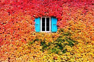 7-2-300x200 صور طبيعه للخريف والربيع hd , صور طبيعه رومانسيه خريف وربيع