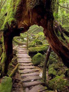 9c7d28bf44c44f18233f02f7ff94840a-portal-pathways-225x300 اجمل صور الطبيعة الخلابة,صور مناظر طبيعية خلابه, صور طبيعة جميلة
