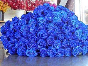 CJWFOBAVAAAC4wH-300x225 صور ورد, صور ورود متنوعه حمراء زرقاء جميلة لامعه, نوع جديد من الورد