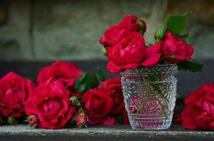 Damascena-Roses01-300x198 صور ورد طبيعي, صور ورد ابيض, صور ورد جوري احمر, صور ورد جوري