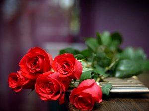 F9-300x225 صور ورد جميلة حمراء, ورود متحركة وخلفيات جميلة, لكل من يحب صور الورد