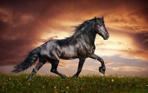 O7J5lBl-300x188 صور خيول جديدة وجميلة روعة, صورة حصان عربي اصيل, احصنة حلوة خلفيات