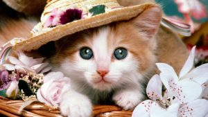 adorable-cat-300x169 صور قطط حلوه, صور قطط قمرات, قطة جميله Photos Cats