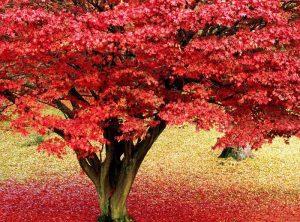 autumn_07-300x222 صور طبيعه للخريف والربيع hd , صور طبيعه رومانسيه خريف وربيع