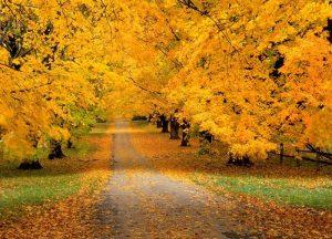 autumn_11-300x216 صور طبيعه للخريف والربيع hd , صور طبيعه رومانسيه خريف وربيع