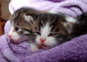 cat-205757_960_720-300x214 صور قطط حلوه, صور قطط قمرات, قطة جميله Photos Cats
