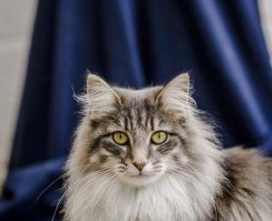 cat-tick-300x243 صور قطط حلوه, صور قطط قمرات, قطة جميله Photos Cats