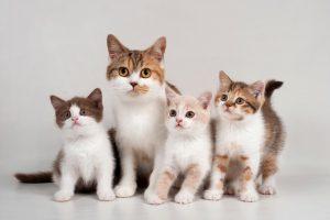 cats-300x200 صور قطط حلوه, صور قطط قمرات, قطة جميله Photos Cats